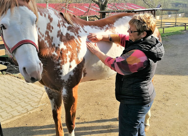 Kolibové Balanční Technika – Kurz koně